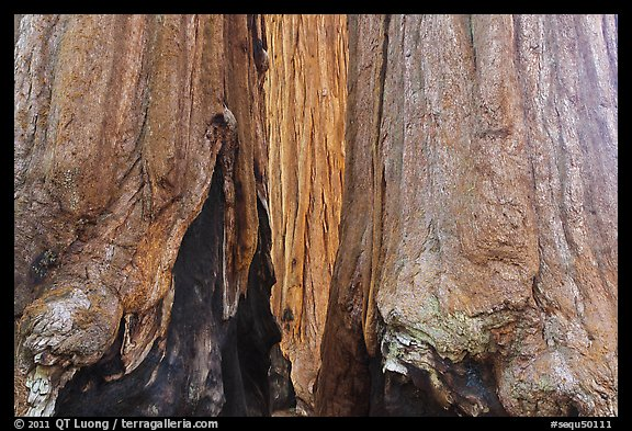 Bark at the base of sequoia group. Sequoia National Park (color)