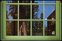 Sentinel tree, Giant Forest Museum window reflexion. Sequoia National Park ( color)