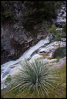 Yucca and gorge of the Kaweah River. Sequoia National Park ( color)