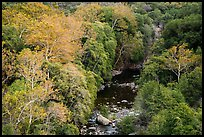 Middle Fork of the Kaweah River in autumn. Sequoia National Park ( color)