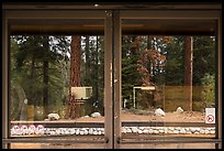 Lodgepole Visitor Center window reflexion. Sequoia National Park ( color)