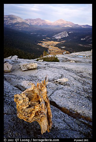 Tuolumne Meadows seen from Fairview Dome, autumn evening. Yosemite National Park, California, USA.
