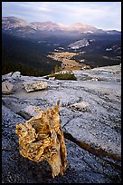 Tuolumne Meadows seen from Fairview Dome, autumn evening. Yosemite National Park, California, USA. (color)