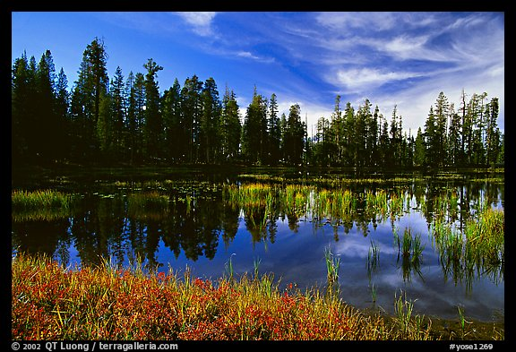 Siesta Lake with Shrubs in autumn colors. Yosemite National Park, California, USA.