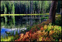 Shrubs in autumn foliage and reflections, Siesta Lake. Yosemite National Park, California, USA. (color)