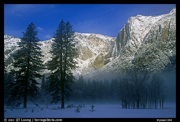 Trees in fog and Yosemite falls, early morning. Yosemite National Park (color)