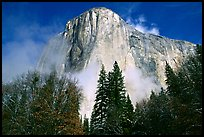 El Capitan, trees and fog, morning. Yosemite National Park, California, USA.