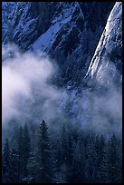 Pines, mist, and Cathedral Rocks. Yosemite National Park ( color)