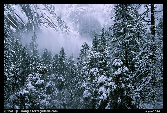 Forest with snow and fog near Vernal Falls. Yosemite National Park (color)
