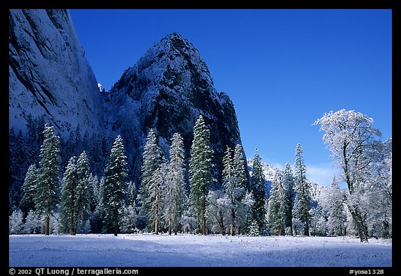 Trees in El Capitan Meadows and Cathedral rocks with fresh snow, early morning. Yosemite National Park (color)