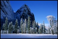 Trees in El Capitan Meadows and Cathedral rocks with fresh snow, early morning. Yosemite National Park, California, USA. (color)