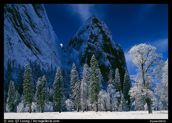 Frozen trees and Cathedral Rocks, early morning. Yosemite National Park (color)