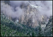 Trees, cliffs and mist. Yosemite National Park, California, USA. (color)