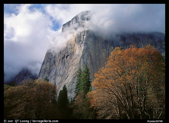 El Capitan with clouds shrouding summit. Yosemite National Park, California, USA.