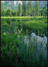 Seasonal pond in spring meadow. Yosemite National Park, California, USA.