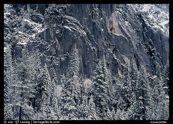 Dark rock wall and snowy trees. Yosemite National Park (color)