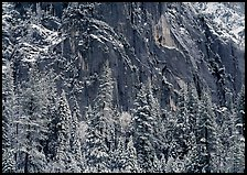 Dark rock wall and snowy trees. Yosemite National Park, California, USA.