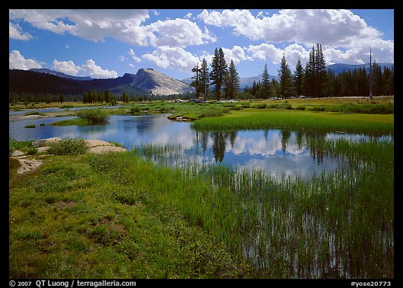 Spring pond in Tuolumne Meadows and Lambert Dome. Yosemite National Park (color)