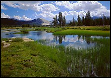 Spring pond in Tuolumne Meadows and Lambert Dome. Yosemite National Park, California, USA.