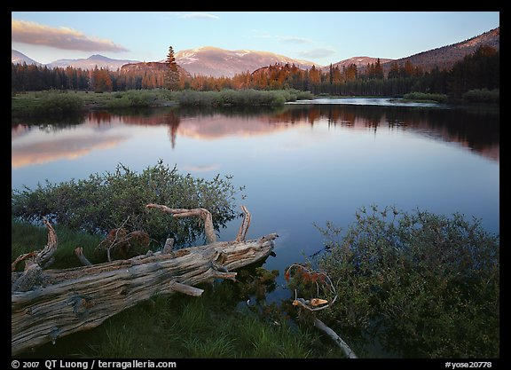 Fallen log and pond, Tuolumne Meadows, sunset. Yosemite National Park (color)