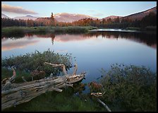Fallen log and pond, Tuolumne Meadows, sunset. Yosemite National Park, California, USA.