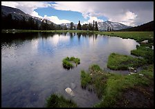 Alpine tarn near Tioga Pass. Yosemite National Park, California, USA.