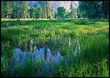Flooded Meadow below Cathedral Rock in spring. Yosemite National Park, California, USA.