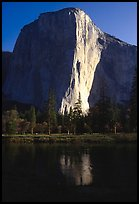 El Capitan reflected in Merced river, early morning. Yosemite National Park, California, USA.