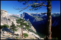Half-Dome framed by pine trees from valley rim, late afternoon. Yosemite National Park, California, USA.