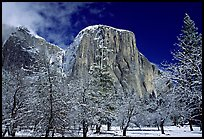 Snow-covered trees and West face of El Capitan. Yosemite National Park, California, USA. (color)