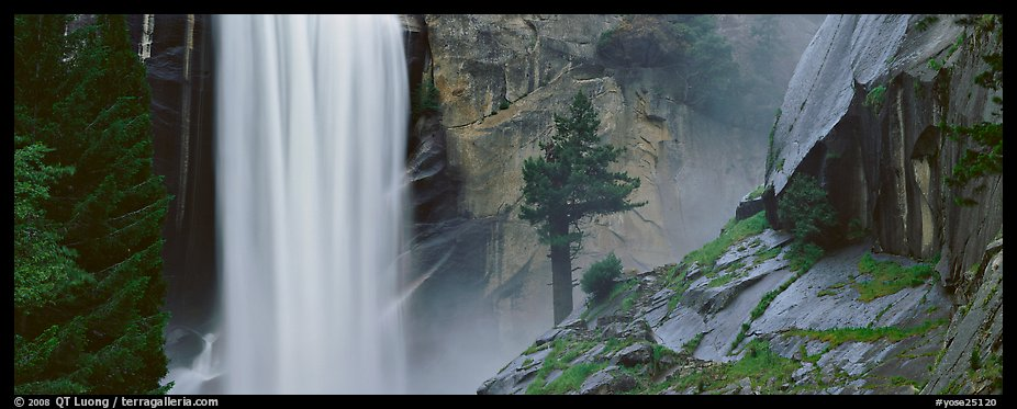 Vernal Fall and tree. Yosemite National Park (color)