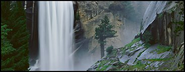 Vernal Fall and tree. Yosemite National Park (Panoramic color)