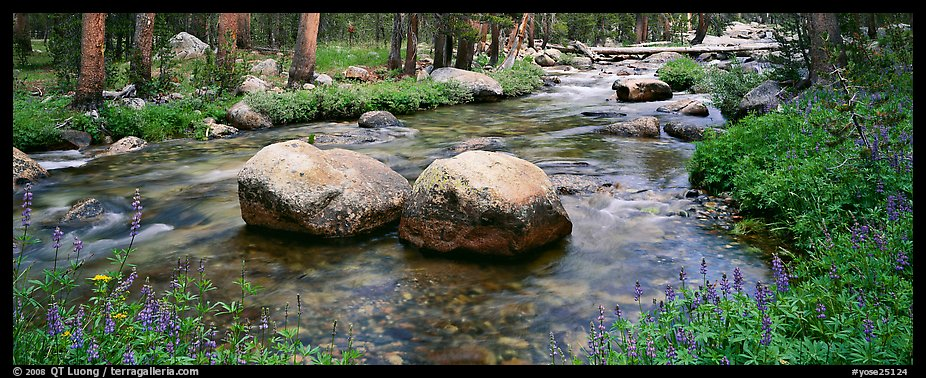 Two boulders in stream with lupine. Yosemite National Park (color)