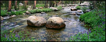 Two boulders in stream with lupine. Yosemite National Park (Panoramic color)