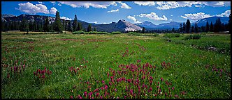 Tuolume Meadows in summer with indian paintbrush. Yosemite National Park (Panoramic color)
