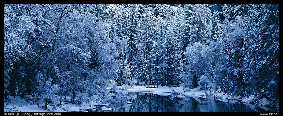 Wintry forest and reflections. Yosemite National Park (color)