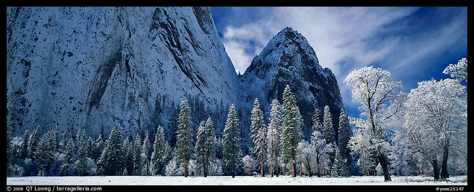 Winter scene with snow-covered trees and Cathdral Rocks. Yosemite National Park (color)