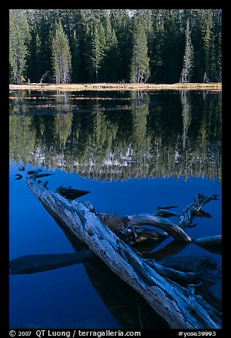 Fallen tree in shade and shore, Siesta Lake. Yosemite National Park (color)