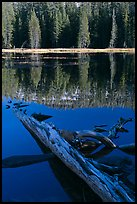 Fallen tree in shade and shore, Siesta Lake. Yosemite National Park ( color)