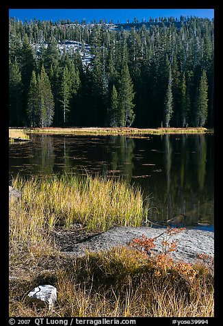 Shore with autumn grasses, Siesta Lake. Yosemite National Park, California, USA.