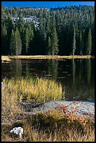 Shore with autumn grasses, Siesta Lake. Yosemite National Park, California, USA. (color)