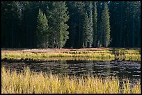 Grass in autumn, Siesta Lake. Yosemite National Park, California, USA.