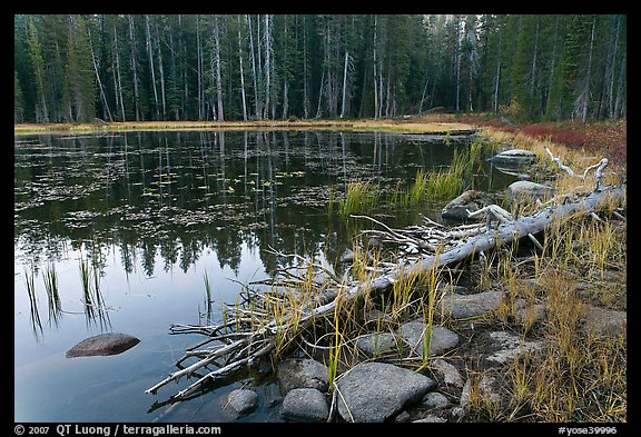 Shoreline in fall, Siesta Lake. Yosemite National Park, California, USA.