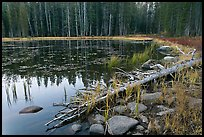 Shoreline in fall, Siesta Lake. Yosemite National Park, California, USA. (color)