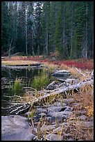 Shore with fall colors, Siesta Lake. Yosemite National Park ( color)