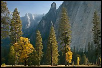 Oaks, pine trees, and rock wall. Yosemite National Park, California, USA.