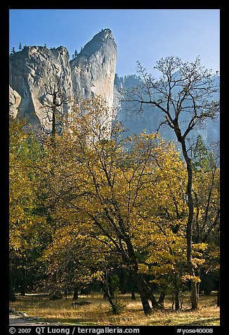 Trees in fall foliage and Leaning Tower. Yosemite National Park (color)