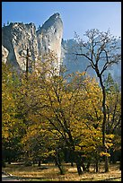 Trees in fall foliage and Leaning Tower. Yosemite National Park, California, USA.