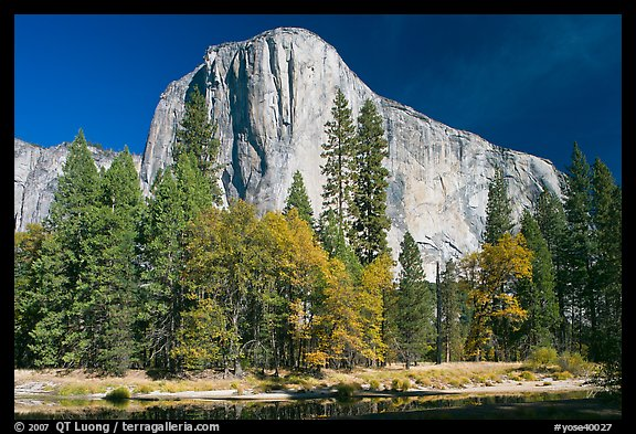 Trees along  Merced River and El Capitan. Yosemite National Park (color)