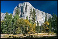 Trees along  Merced River and El Capitan. Yosemite National Park, California, USA.